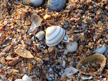 Schelpen pracht. Shells on beach. van Joke Schippers