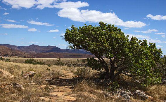 Wandelpad in Zuid-Afrika