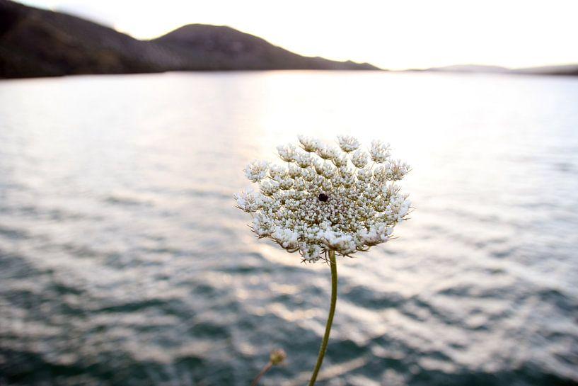 The Flower at the Lake van Cornelis (Cees) Cornelissen