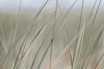 Close-up Helmgras van DsDuppenPhotography