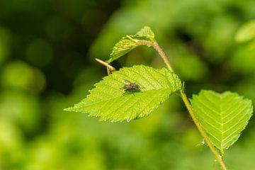 Vlieg in het groen van Dany Tiels