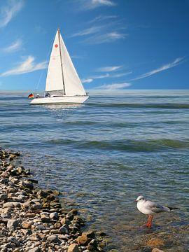 Zeilboot op de kust met zeemeeuw van Monika Jüngling