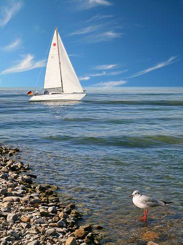 Segelboot an der Küste mit Möwe von