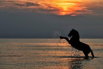 steigerend paard. van Tilly Meijer