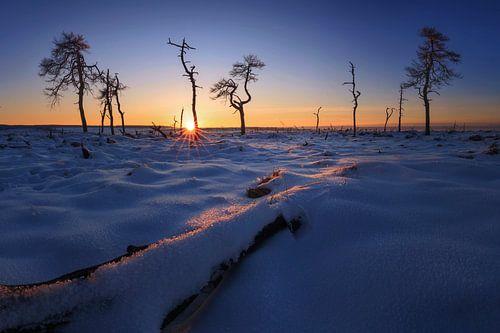 Het verbrande bos bij zonsondergang. van