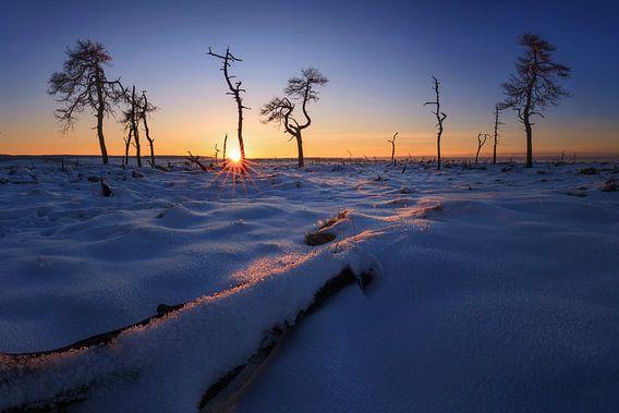 Het verbrande bos bij zonsondergang. van Sven Broeckx