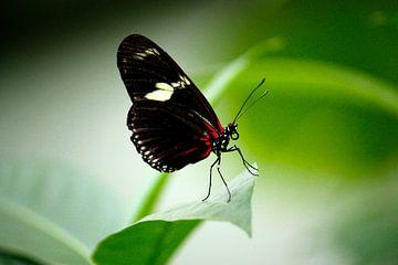 Schmetterling fliegt weg von Iris Lobregt