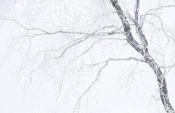 Berk in de sneeuw