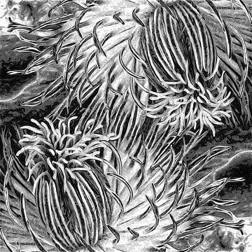 Zwei miteinander verbundene Clematisblüten von Anna Marie de Klerk
