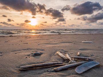 Muscheln im Sand am Strand von Sankt Peter-Ording von Animaflora PicsStock