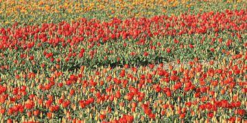 Tulpenvelden von Rob Hendriks