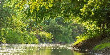 Fluss in Grün von Leo Diepstraten