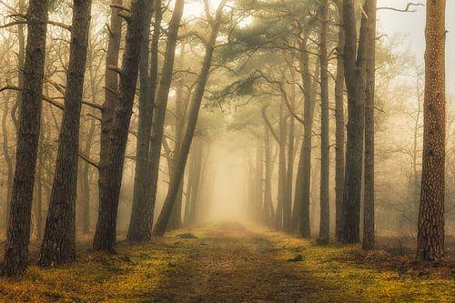 Sfeervol bospad op een mistige ochtend