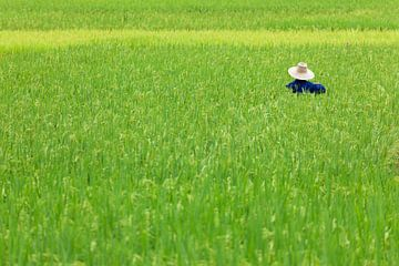Chinese rijstboer in Yangshuo, China van Alida Stuut
