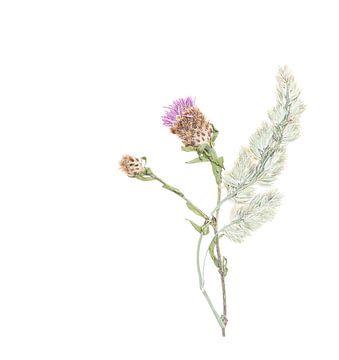 Fleur séchant les beaux-arts. sur Jacqueline de Groot