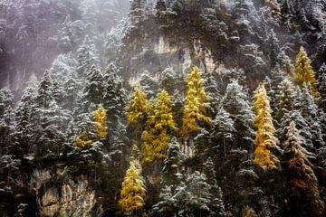 Herfst in de bergen von Berend-Jan Bel