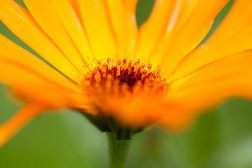 Gele bloem van Evelyne Renske