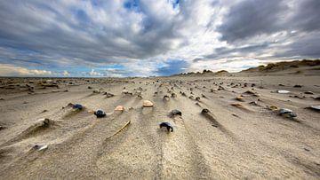 Muscheln im Wind fegten Sand auf der einsamen Insel Rottumerplaat im Wattenmeer. von Rudmer Zwerver