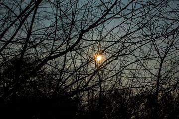 Sonne durch die Zweige von Onno van Kuik