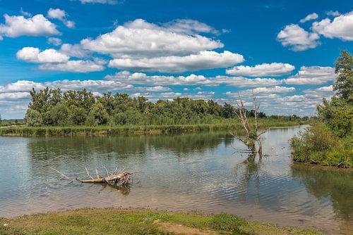 Natuurreservaat de Biesbosch