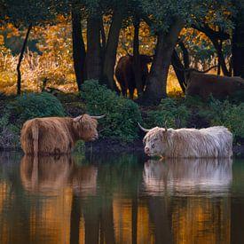 Herbst von Heiko Lehmann