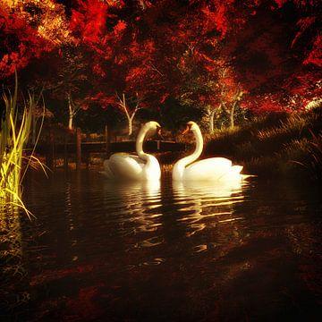 Tierreich  – Schwäne in einem Teich von Jan Keteleer