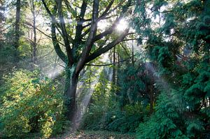 Een prachtige ochtend in het bos van