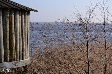 Vogelkijkhut de Leijen von Simone van der Heide