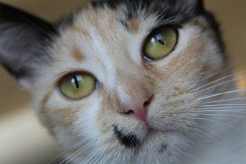 katten close up  van