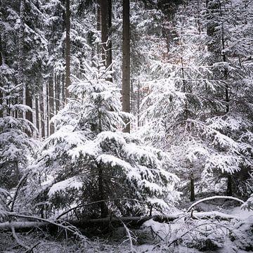 Winterwald von Tobias Luxberg