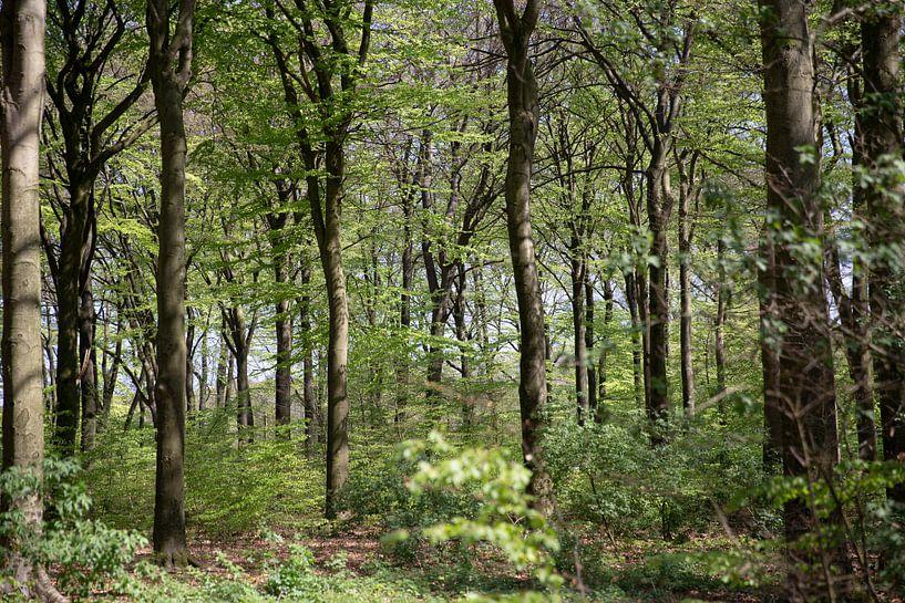 Forêt sur Sander de Jong
