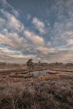 Mooie wolkenlucht boven de Hatertse Vennen van Moetwil en van Dijk - Fotografie