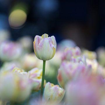 tulpen in pasteltint 4 van Leontien van der Willik-de Jonge