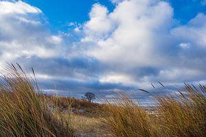 Düne an der Küste der Ostsee auf dem Fischland-Darß