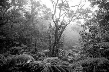Regenwald auf der Insel Hawaii von Ellis Peeters