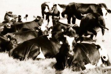 Koeien in het gras. van