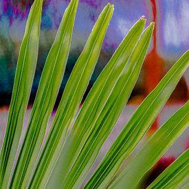 Palmblad tegen schilderachtige achtergrond van Peters Foto Nieuws l Beelderiseren