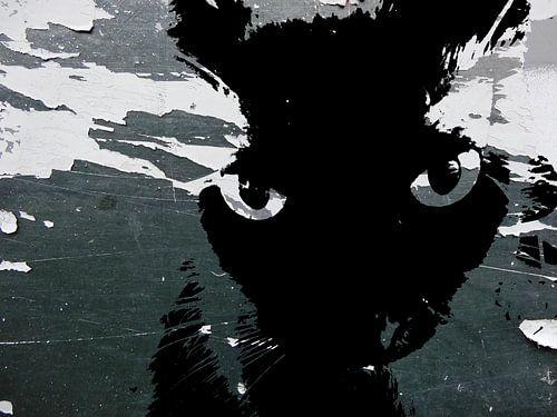 Kattenkunst - Storm 2 van