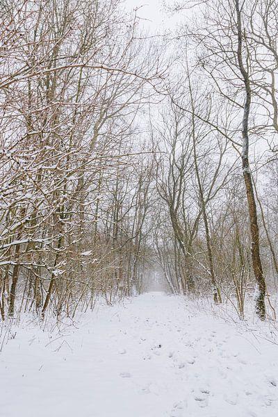 Winterwunderland während eines Schneesturms in einem Wald in Almere, Niederlande | Schneelandschafte von Evelien Lodewijks