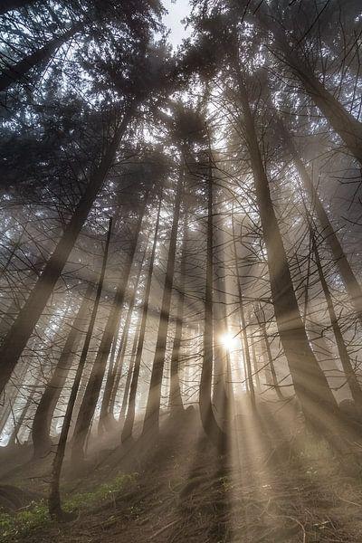 Sunrise in the Mountainforest van Manfred Schmierl