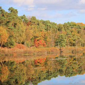 bomen in Herfstkleuren aan het water van Richard van Oudheusden