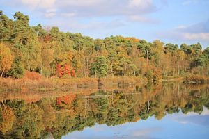 bomen in Herfstkleuren aan het water von