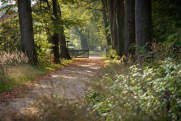 Wandelen in een herfstbos van Fotografiecor .nl