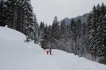 Pad door het woud in de sneeuw sur