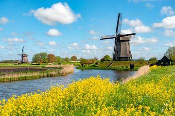 Molens in Noord Holland op een zonnige lentedag.