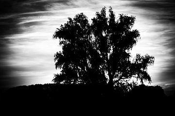 Zonsondergang achter boom  von Marcel Rommens