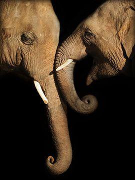 Olifanten in de liefde van Eye to Eye Xperience By Mris & Fred