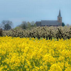 Koolzaadveld met kerk van Moetwil en van Dijk - Fotografie