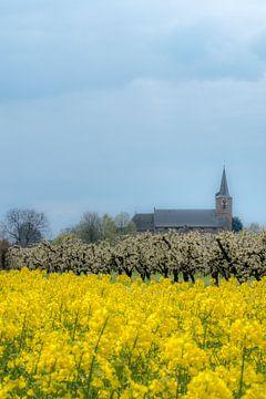 Koolzaadveld met kerk