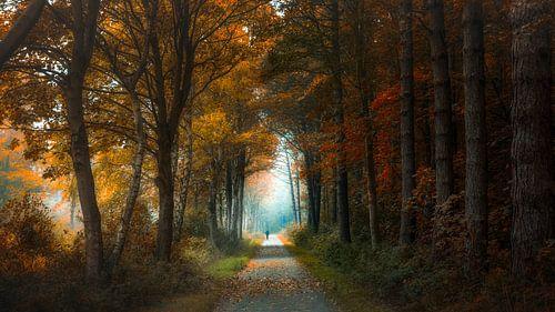 Ultiem herfstgevoel van